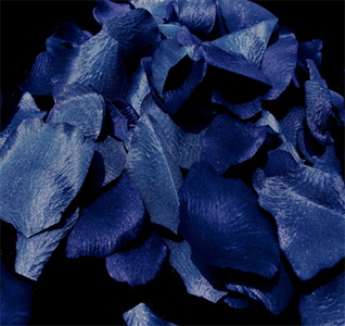 royal-blue-rose-petals-m.jpg