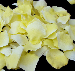 yellow-rose-petals-m.jpg